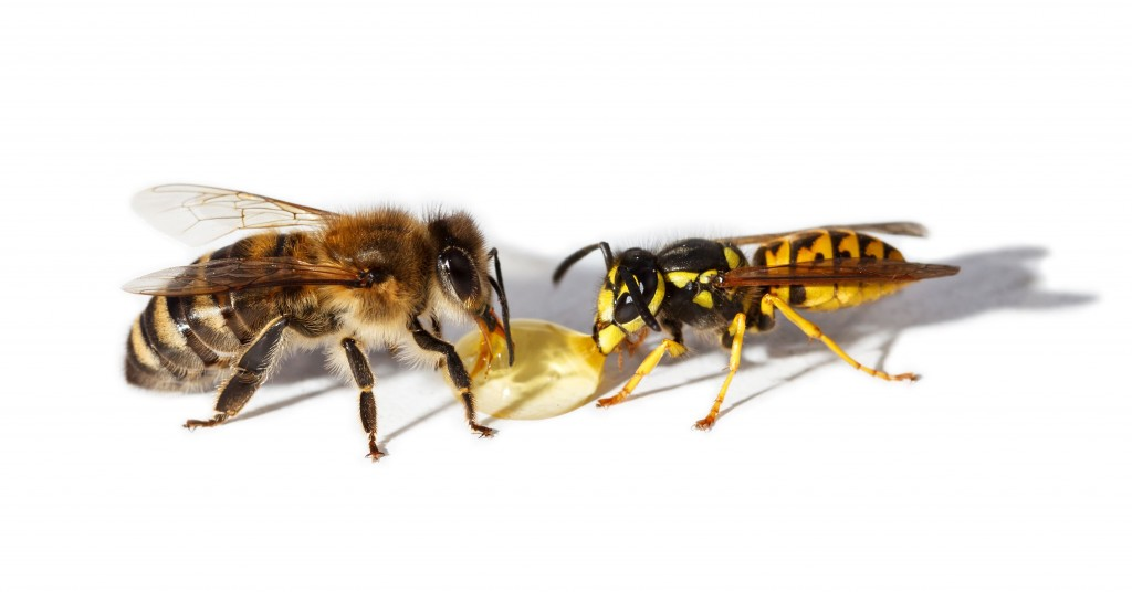 Bee and wasp eat honey